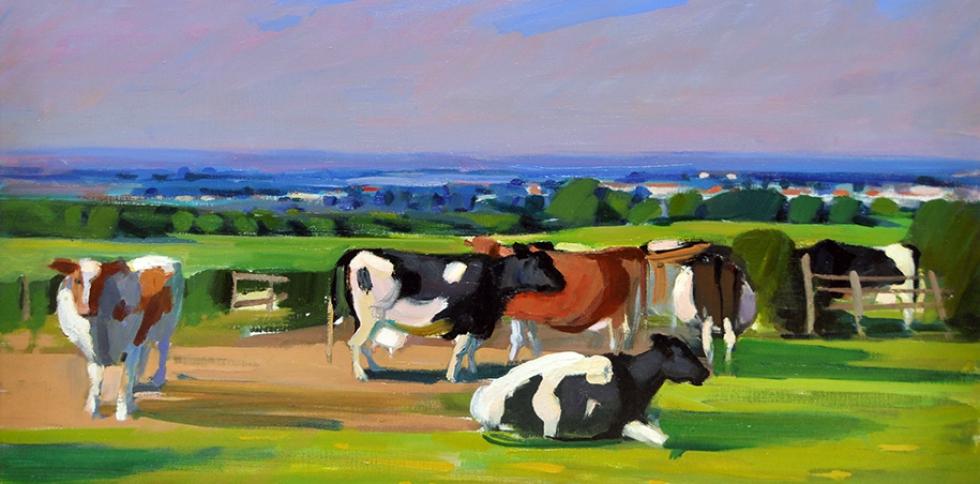 cunningham cows